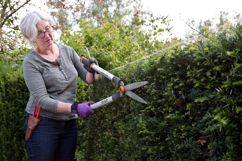 How To Prune A Yew Hedge Bbc Gardeners World Magazine
