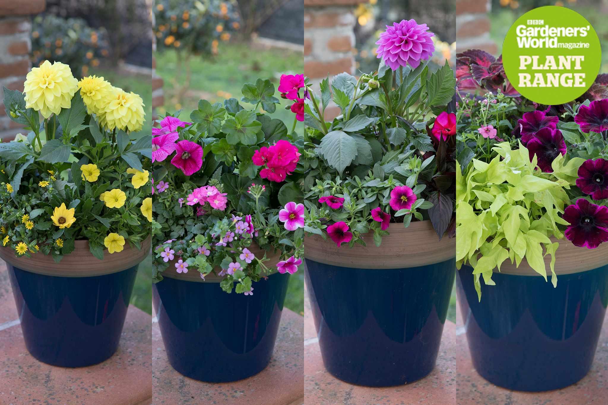 BBC Gardeners' World Magazine plant range, one to four