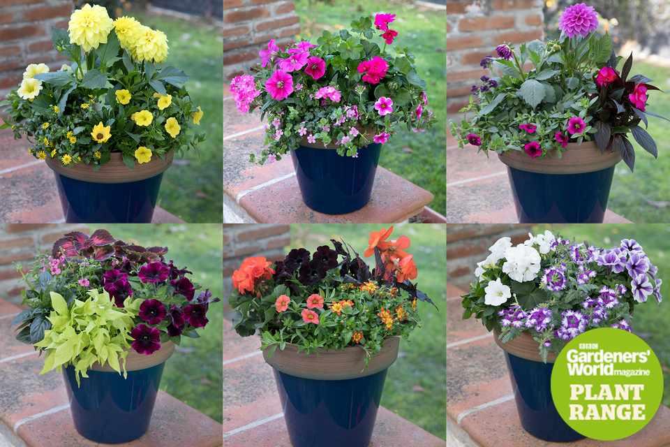 Gardeners' World Magazine, six plant collections