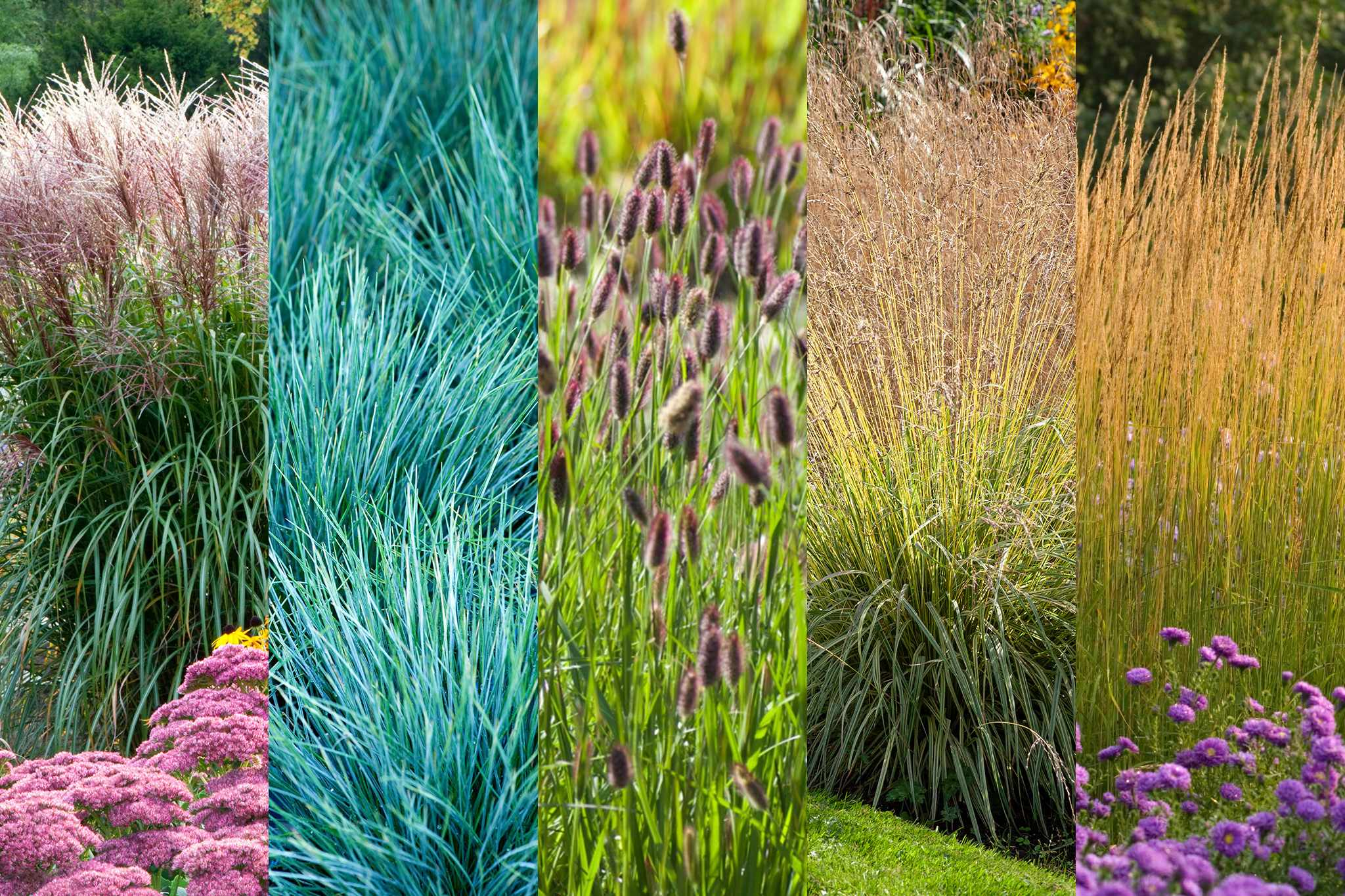 Grasses collection from Hayloft