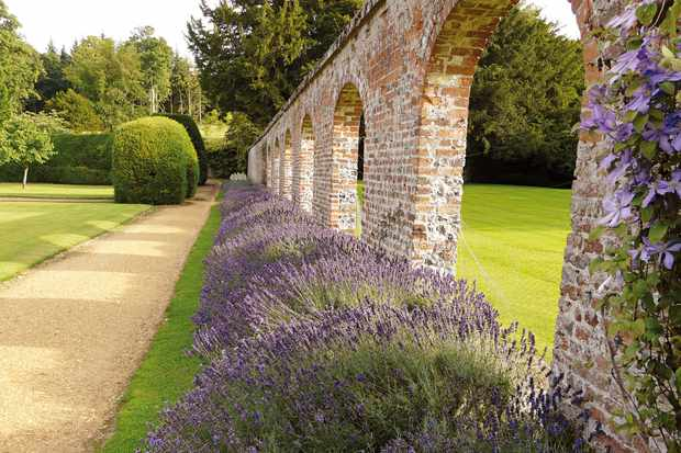 Lavender border at Highclere Castle gardens