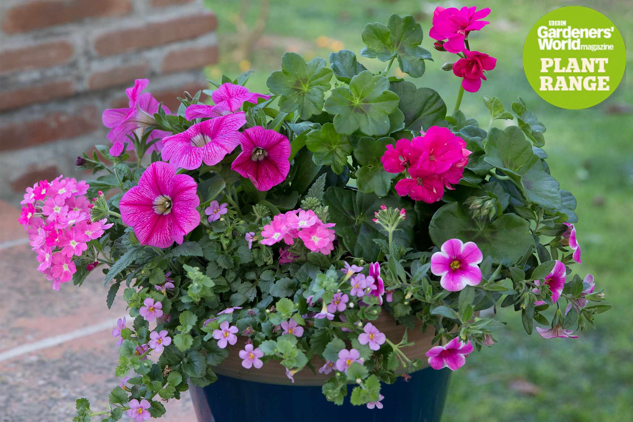 Pink Perfection plant collection