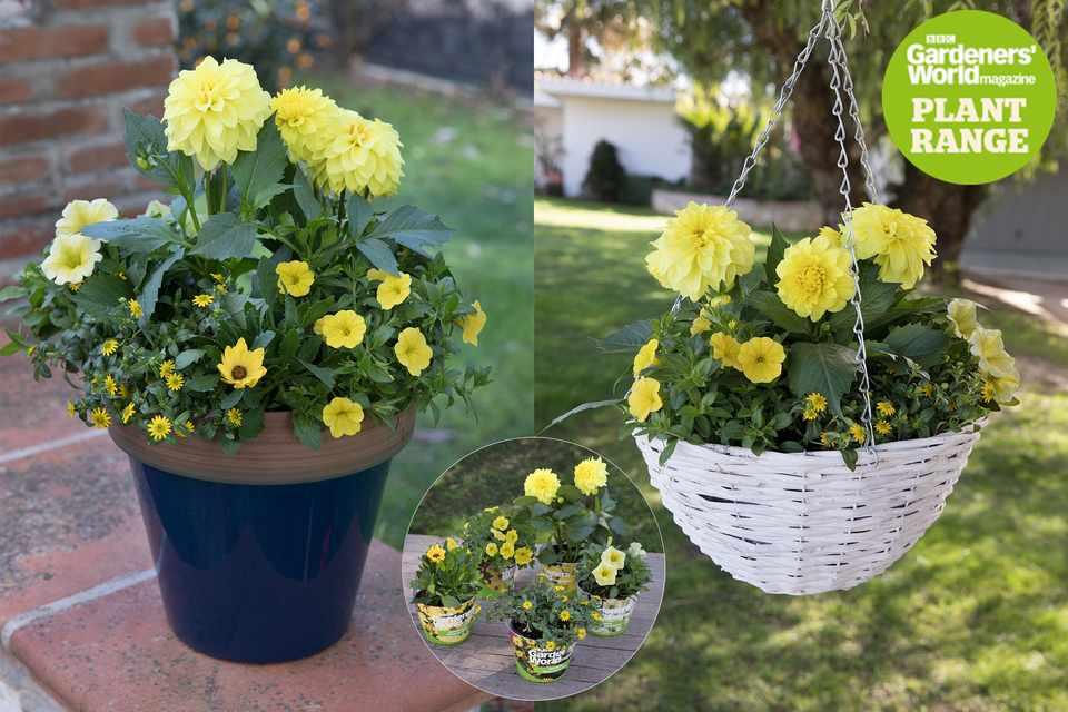Summer Sunshine plant collection