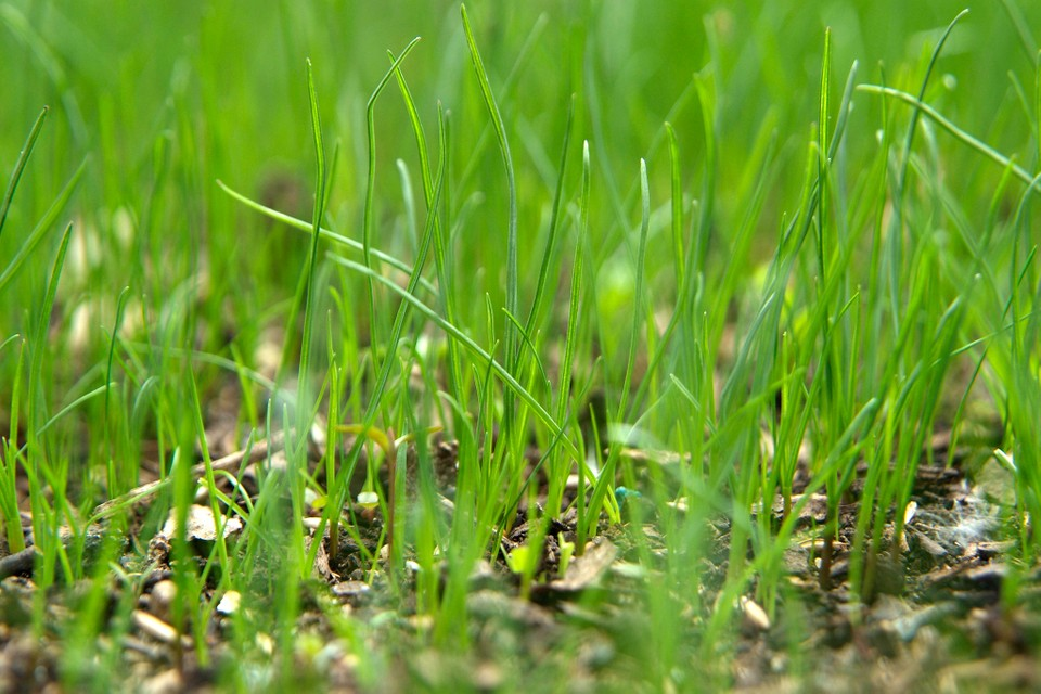 On anything grass 🌱 that will seed grow Bug Out
