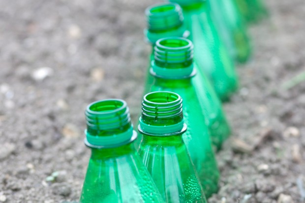 Thrifty tips - using bottle cloches