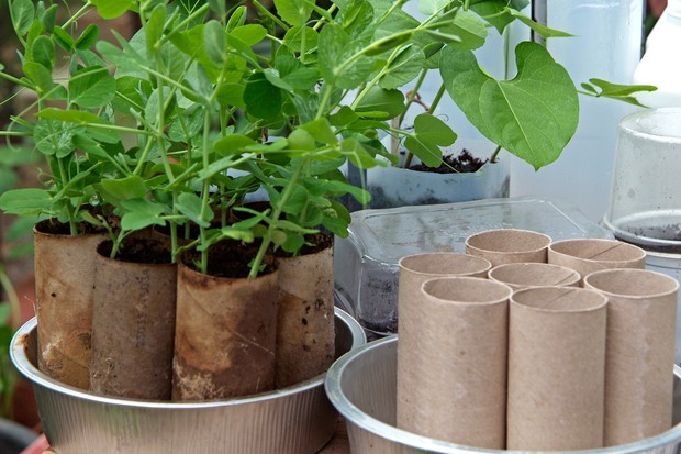 Thrifty tips - using toilet roll inners as pots