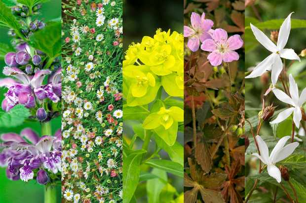 Hardy perennials collection from Hayloft