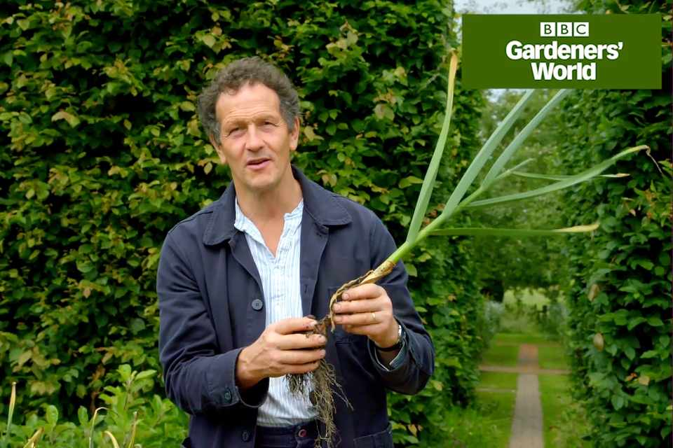 Monty Don growing and harvesting garlic