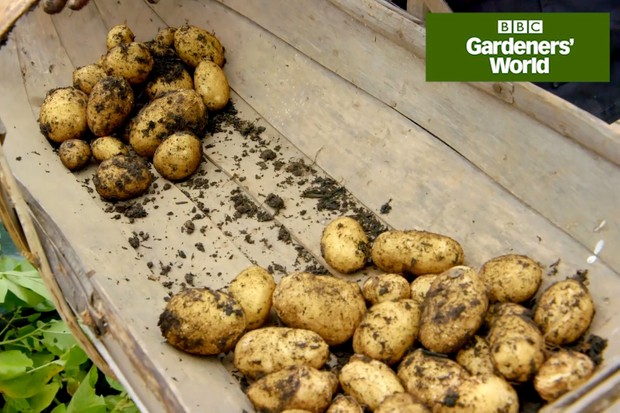 Monty Don harvests potatoes grown in a bag