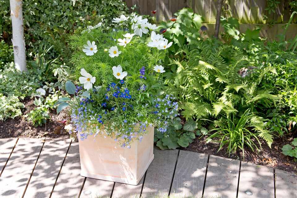 Gardening mistakes - heavy plant pot