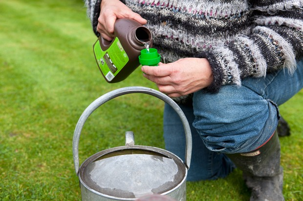 How to give your lawn a liquid feed - making the solution