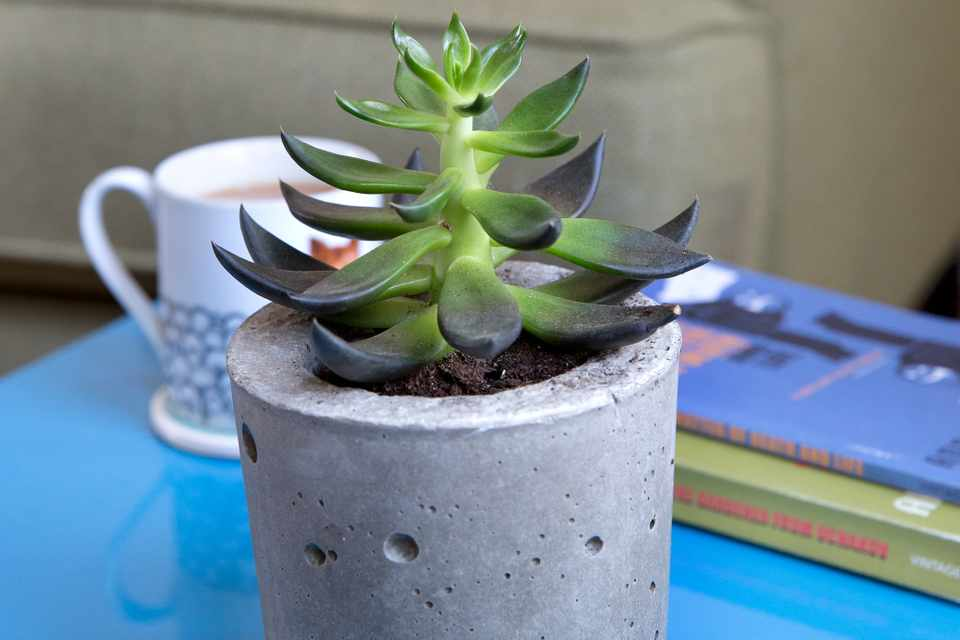 How to make a concrete planter for houseplants
