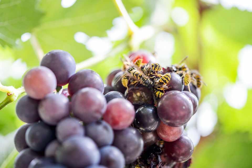 Summer garden problems solved - wasps