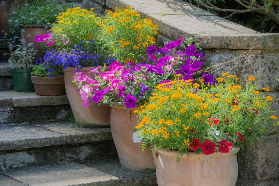 Colourful bedding plants in containers. Photo: Getty Images.
