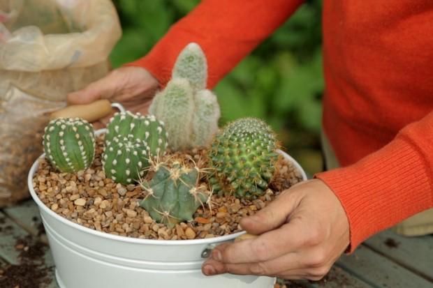Cacti house plant display