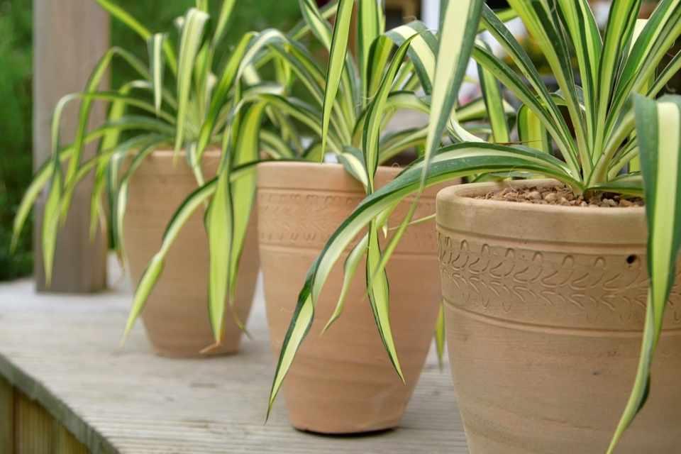 Pot displays - formal repetition