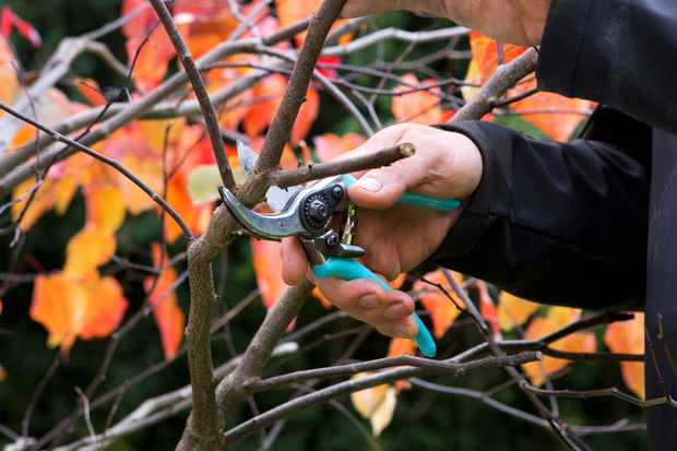 Autumn pruning Masterclass at The Savill Garden