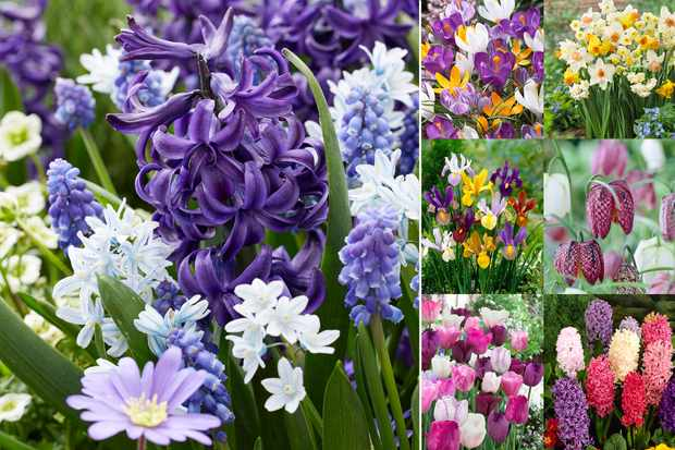 Free spring bulb collection when you pay postage, from Hayloft
