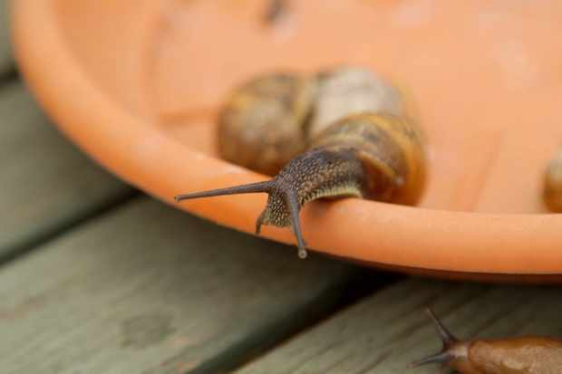 How to deal with slugs and snails organically