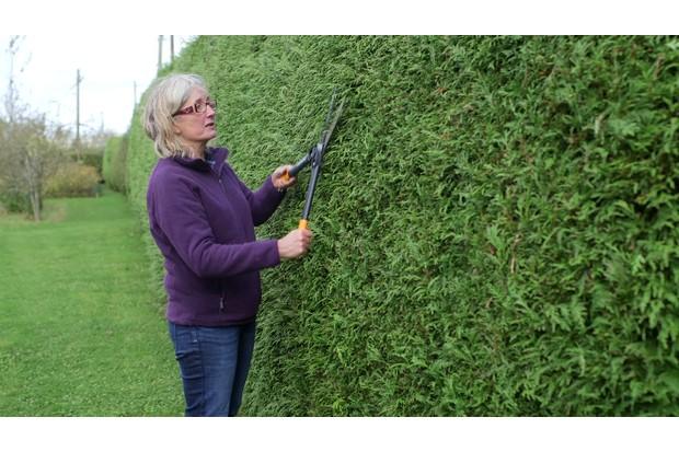 Garden wildlife jobs - trim your hedge