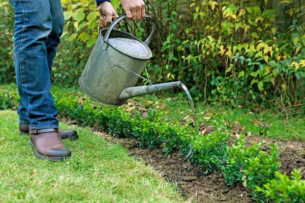 10 tips for planting success