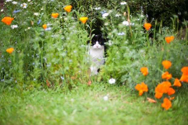 Pet-friendly plants to grow