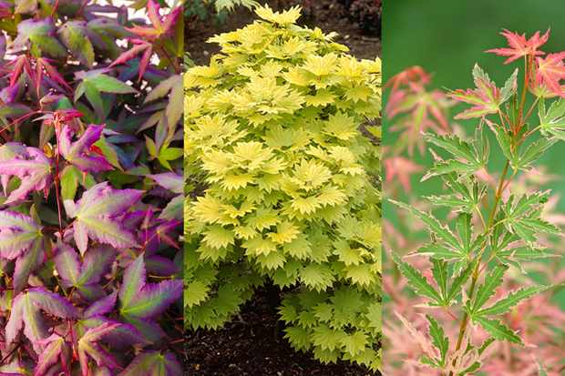 Save up to £15 on acers at Blooming Direct