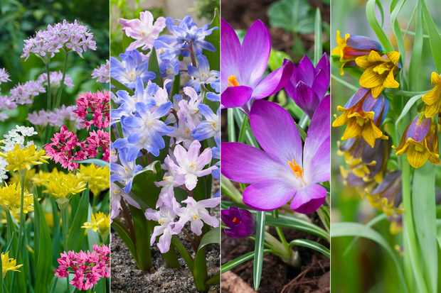 Just pay postage to receive a free collection of spring and summer bulbs from Hayloft