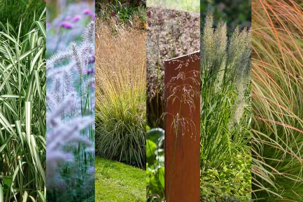 Glorious Grasses collection from Hayloft, with free bulbs