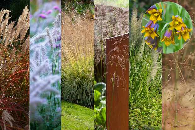 Ornamental grasses collection, plus free bulbs from Hayloft