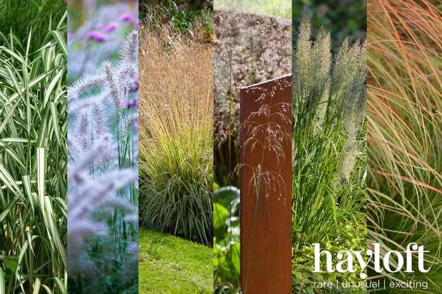 Save 50% on glorious grasses collection from Hayloft