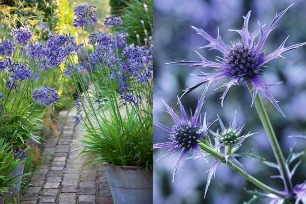 Save 20% on perennials to plant this autumn, from Sarah Raven