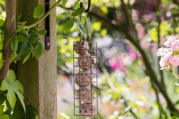 Garden wildlife jobs - leave calorie-rich food for birds