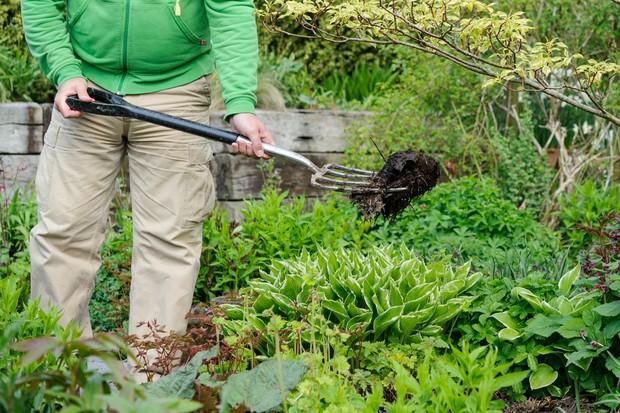 Garden wildlife jobs - mulch your borders