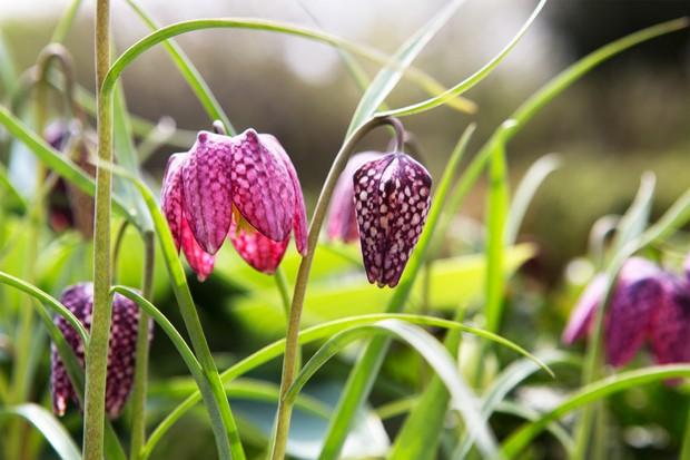 Garden wildlife jobs - plant spring-flowering bulbs