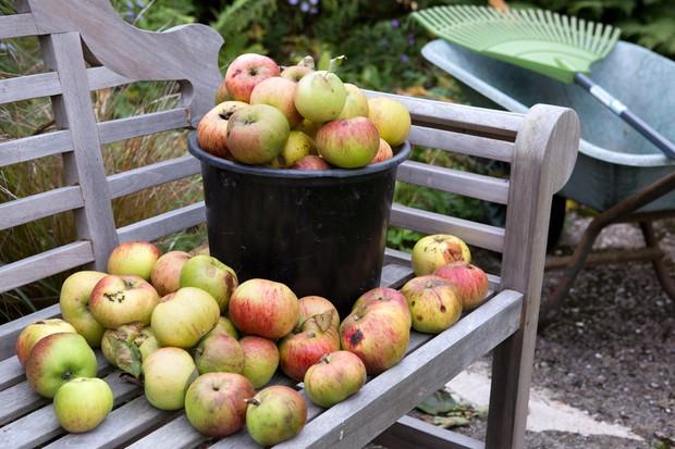 Garden wildlife jobs - leave windfall apples