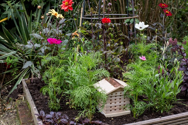 Garden wildlife jobs - take down your bee hotel