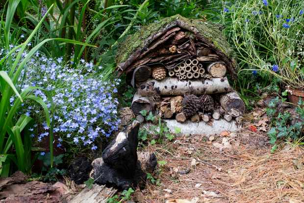 Garden wildlife jobs - make habitat piles