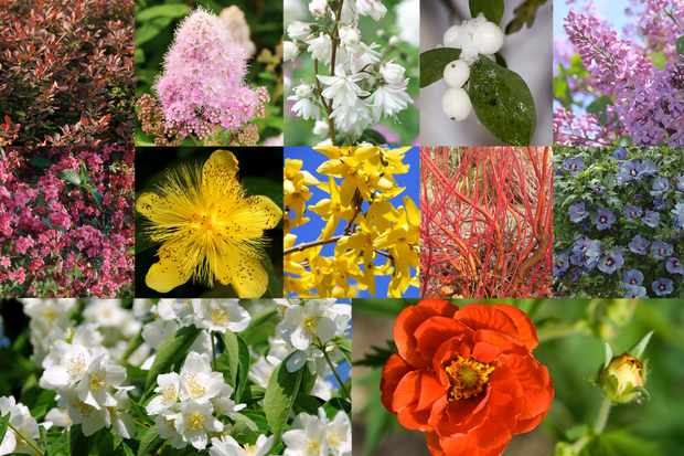 Winter hardy shrubs collection from Blooming Direct