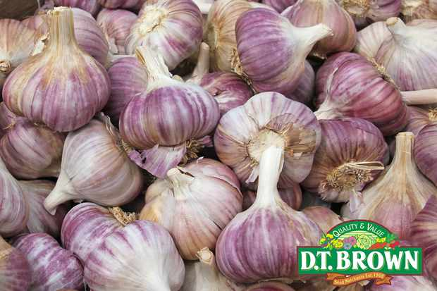 Save £2 on postage for garlic 'Caulk Wight' from D.T. Brown