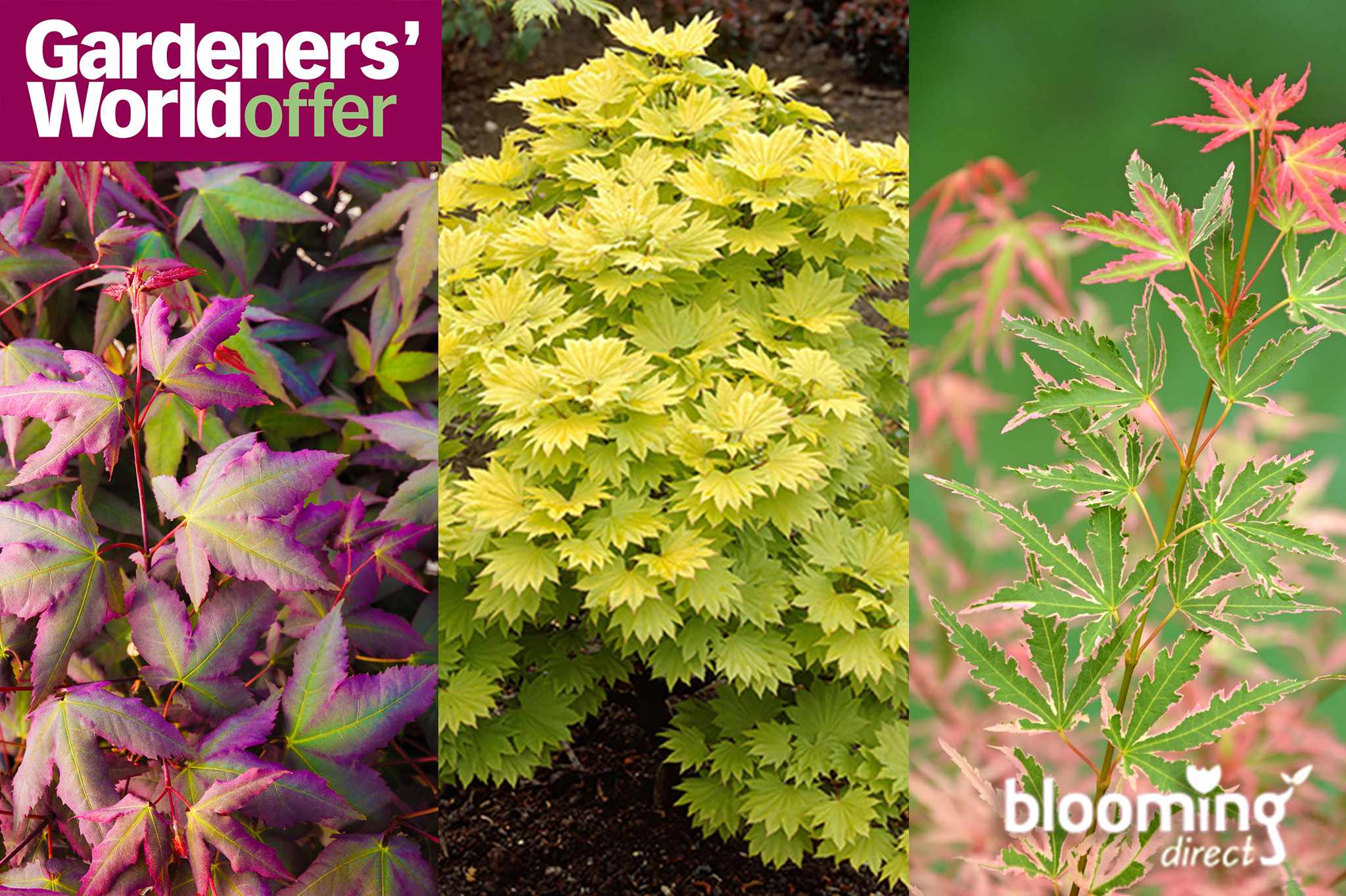Save £15 on acers at Blooming Direct