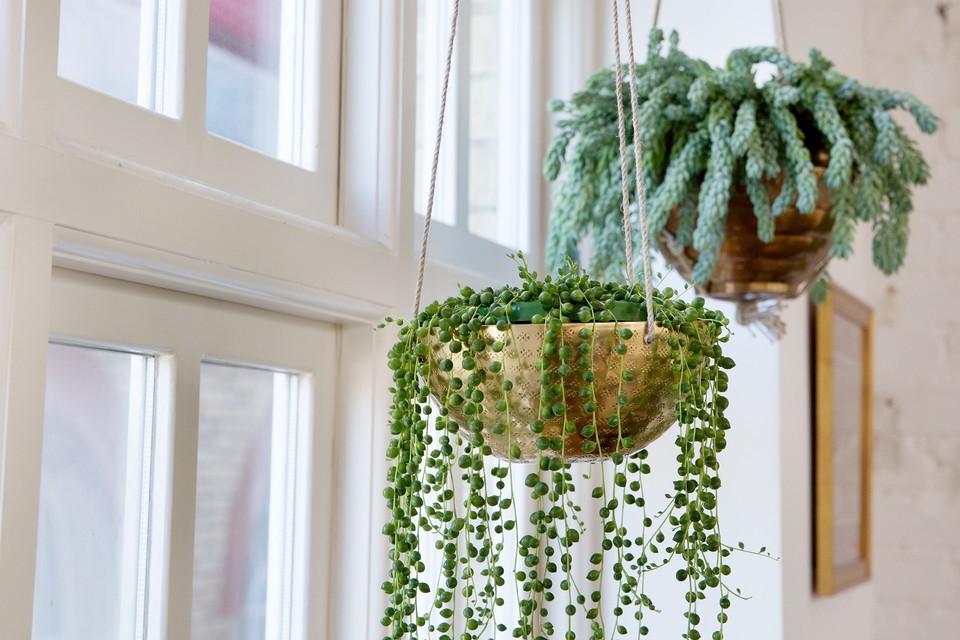 15 Best Hanging House Plants To Grow Bbc Gardeners World Magazine