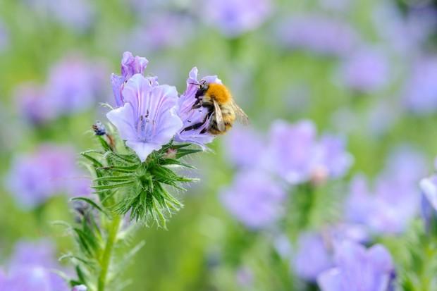 Beginner gardening tips - be kind to wildlife
