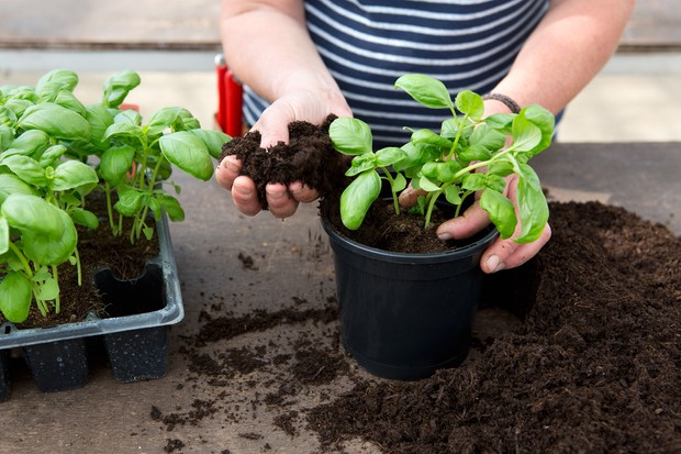Reduce your carbon footprint - grow your own food