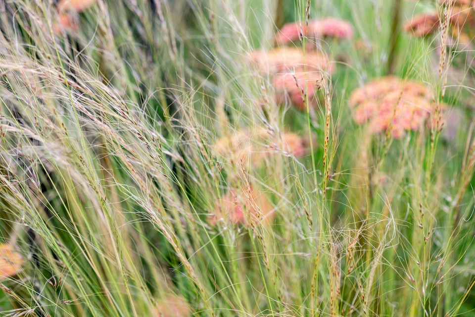 Perennial Grasses To Grow Bbc Gardeners World Magazine