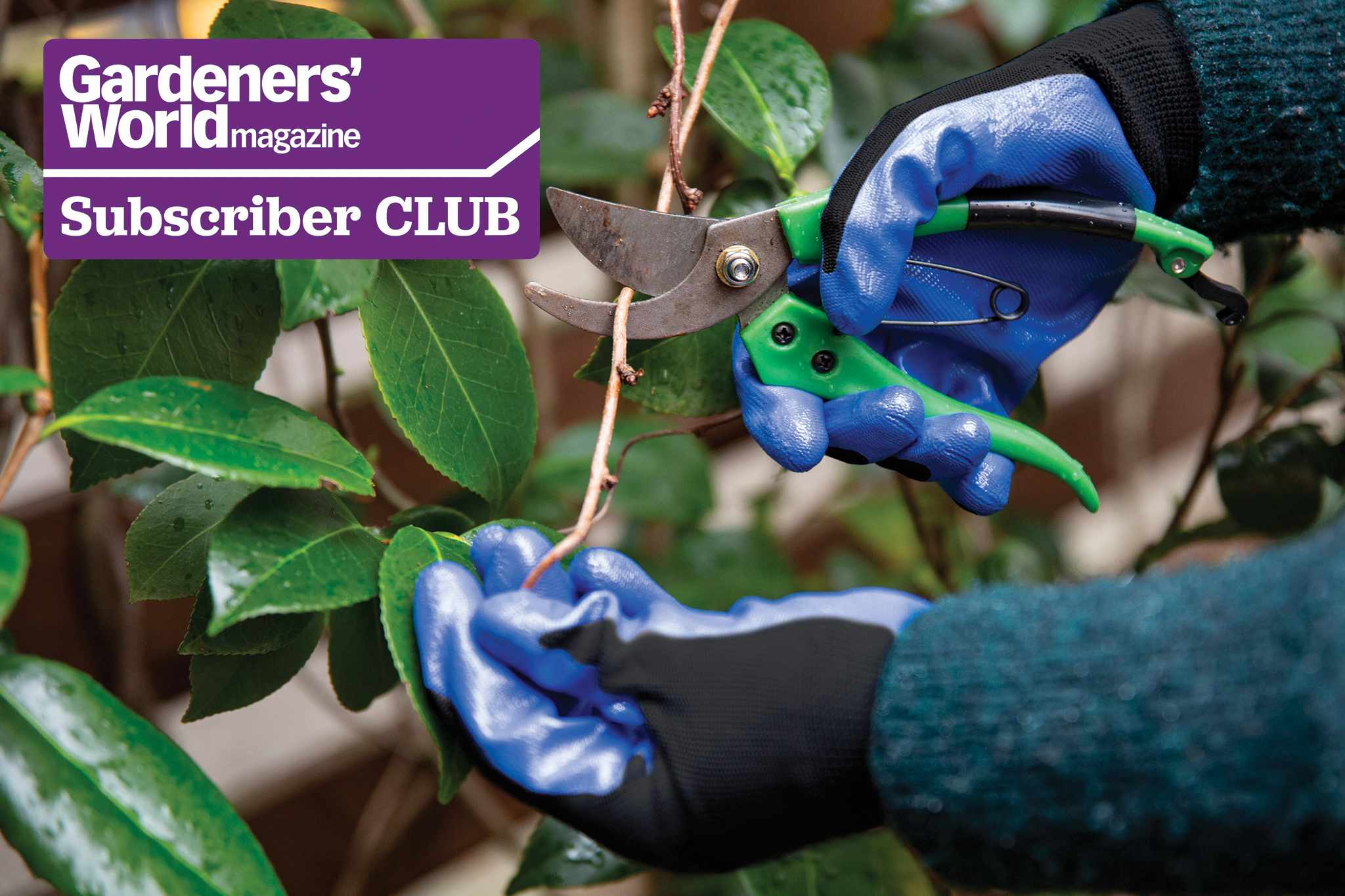 Subscriber Club: Win a pair of gardening gloves