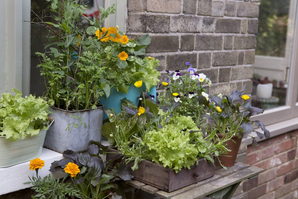 How To Grow Vegetables In Pots Bbc Gardeners World Magazine