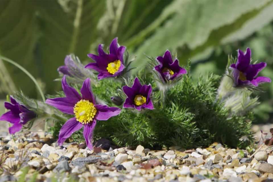 Virtual garden tour: botanical wanderings
