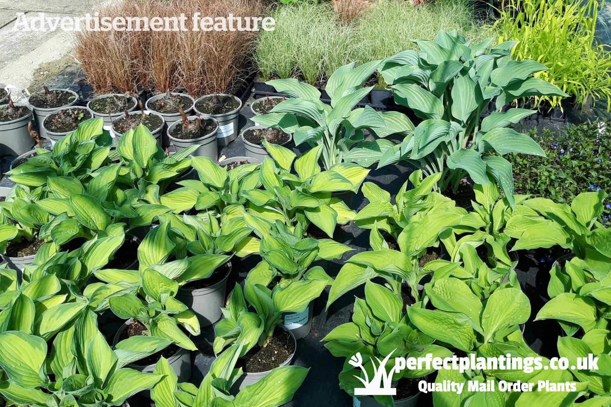 2020-Jul-Perfect-Plantings-thumbnail-2048-1365