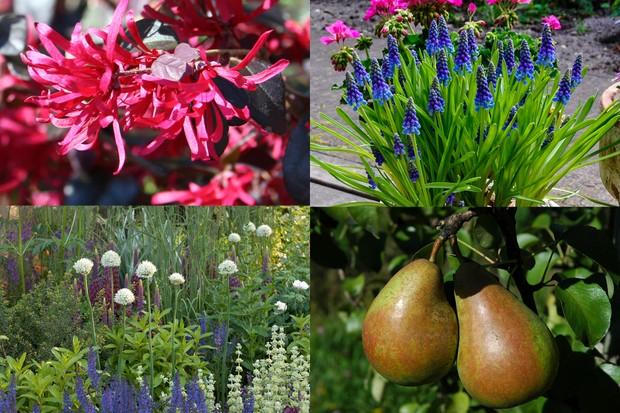 Great Offers From Bbc Gardeners World Magazine Bbc Gardeners World Magazine
